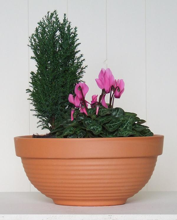 dell bowl